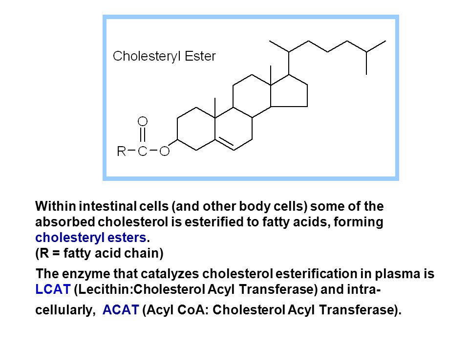 Within intestinal cells (and other body cells) some of the absorbed cholesterol is esterified to fatty acids, forming cholesteryl esters.