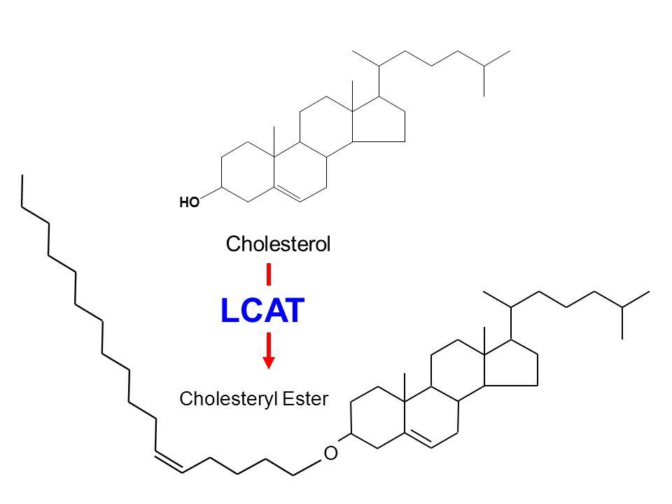 H O Cholesterol O Cholesteryl Ester LCAT