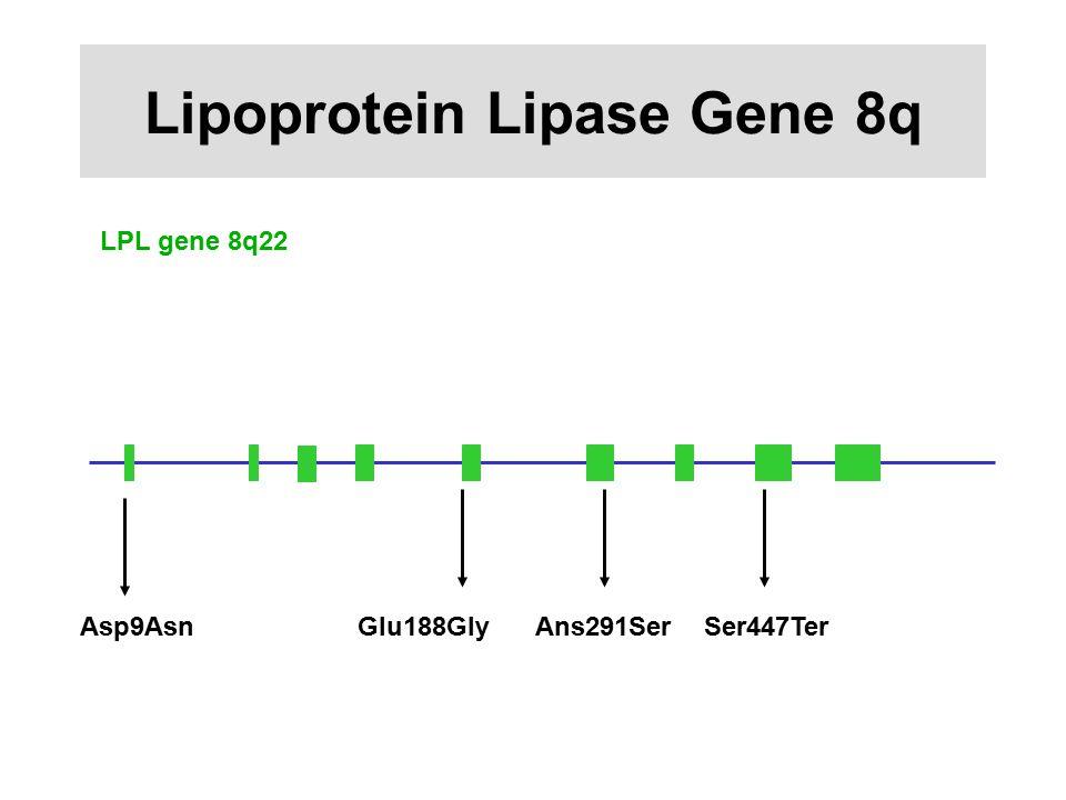 Lipoprotein Lipase Gene 8q