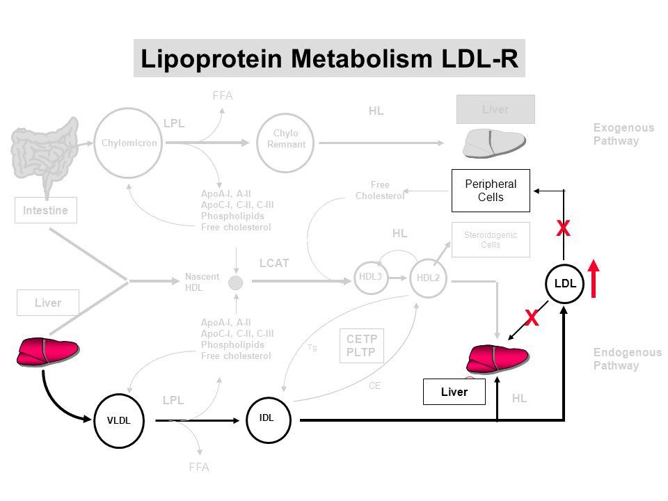 Lipoprotein Metabolism LDL-R