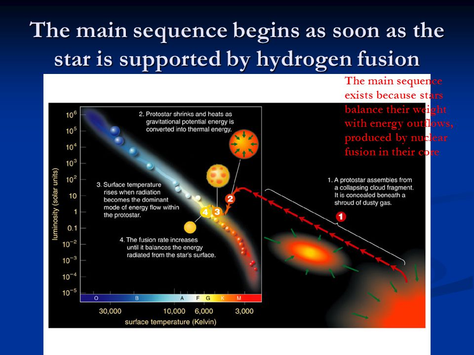 The main sequence begins as soon as the star is supported by hydrogen fusion