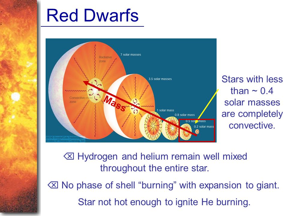 Red Dwarfs Stars with less than ~ 0.4 solar masses are completely convective. Mass.