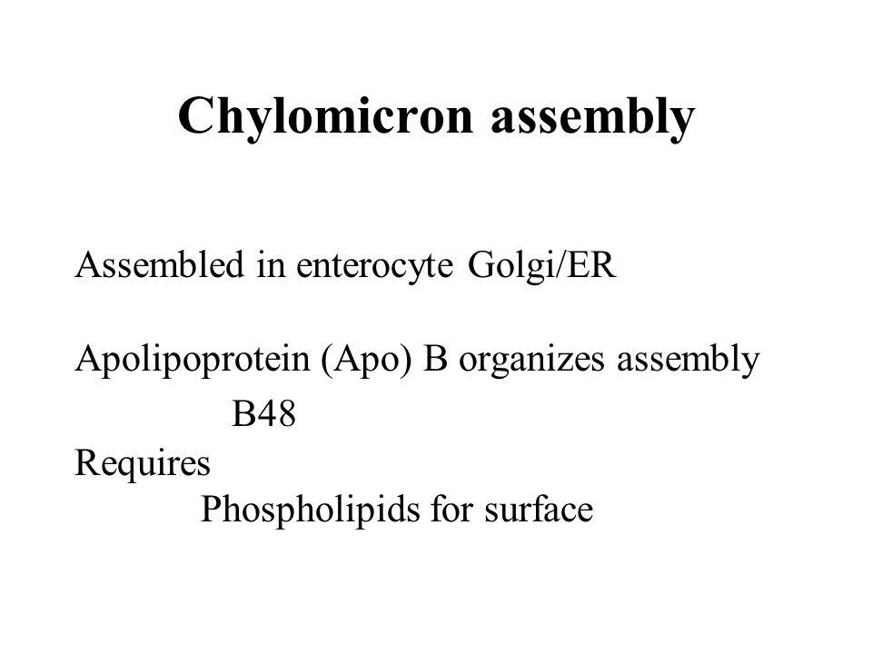 Chylomicron assembly B48 Assembled in enterocyte Golgi/ER
