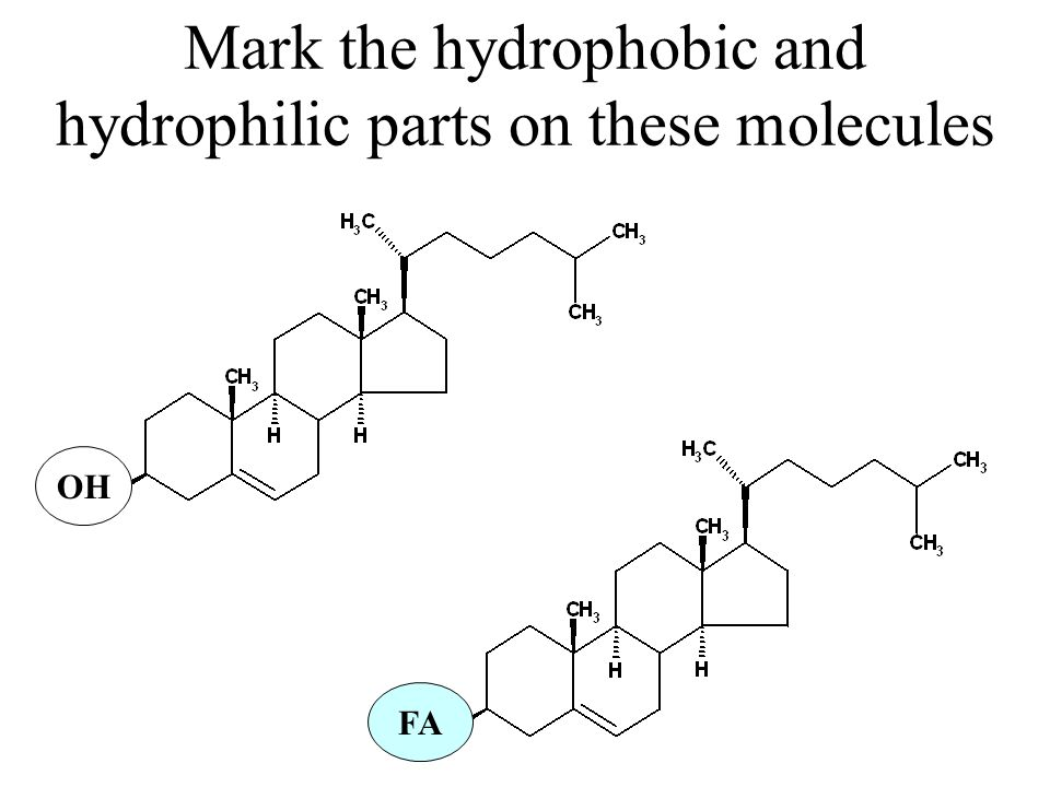 Mark the hydrophobic and hydrophilic parts on these molecules