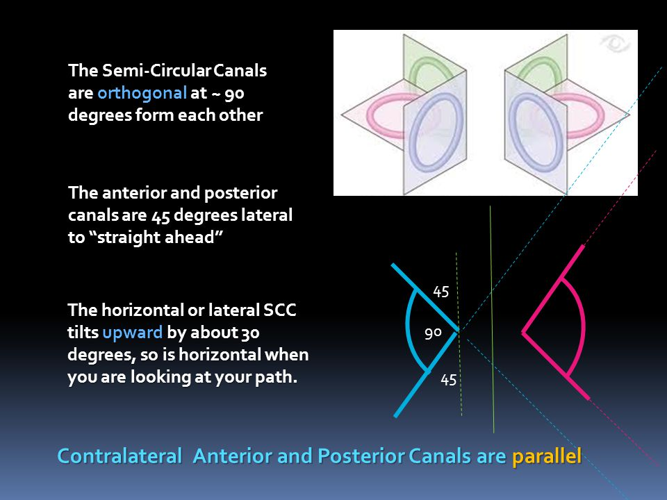 Contralateral Anterior and Posterior Canals are parallel