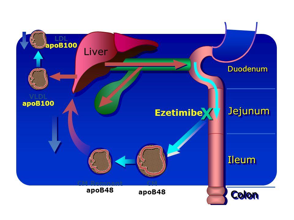 X Cholesterol torsHo Liver Jejunum Ileum Colon Ezetimibe Duodenum