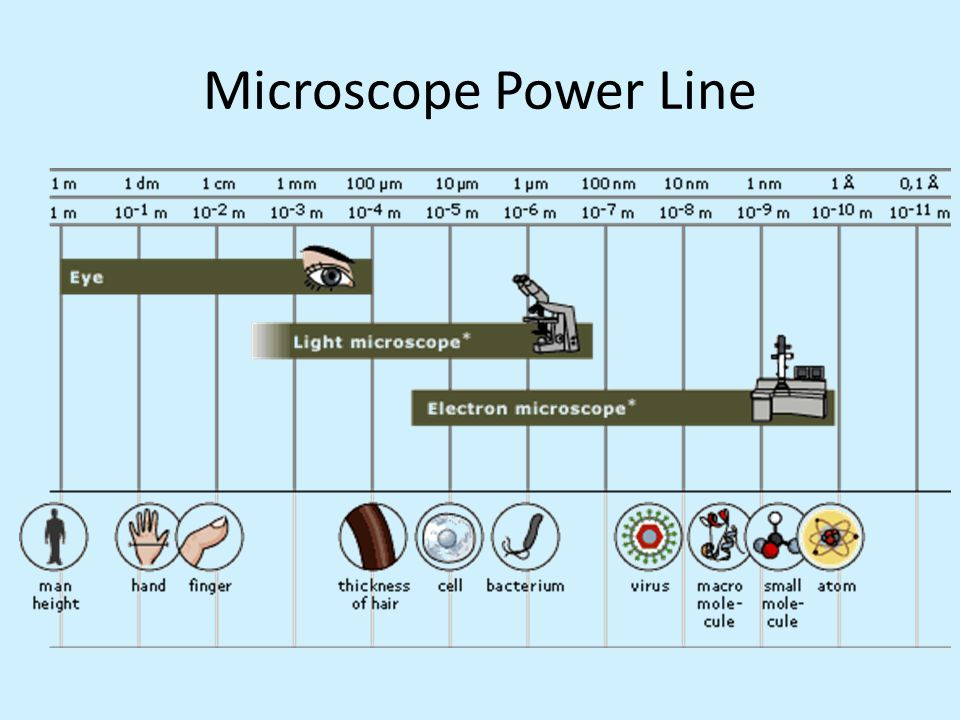Microscope Power Line