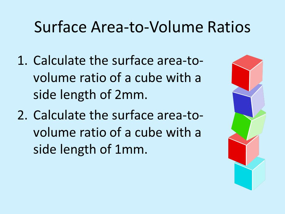 modelling surface area to volume ratio in cells with agar cubes essay Start studying biology isa/empa june 2013 learn you used agar cubes as model cells to find the relationship between surface area to volume ratio and the rate.