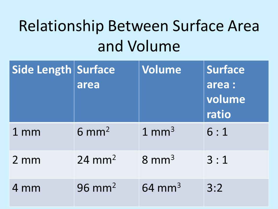 surface area and volume relationship in cells