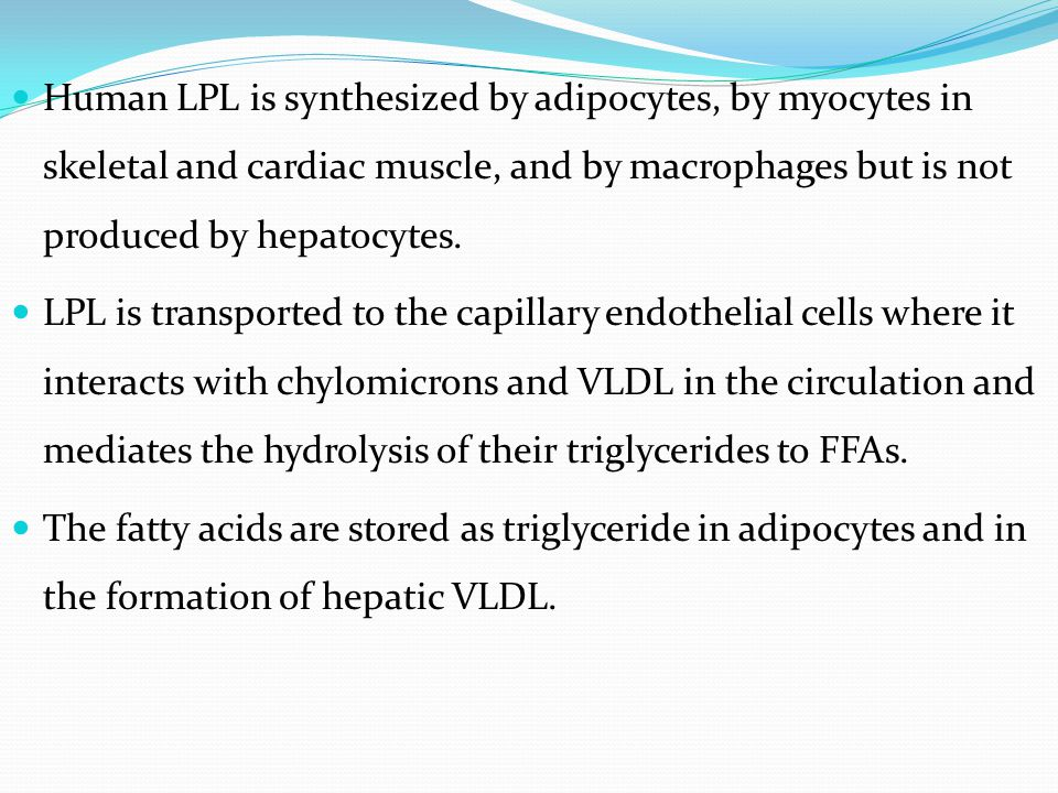 Human LPL is synthesized by adipocytes, by myocytes in skeletal and cardiac muscle, and by macrophages but is not produced by hepatocytes.