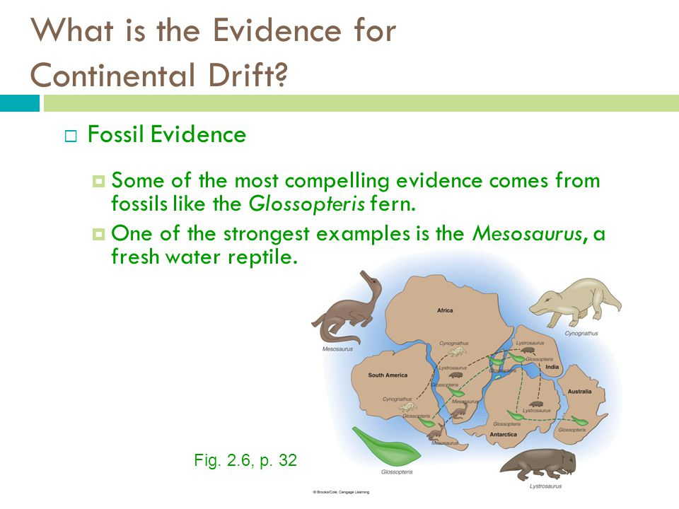 What is the Evidence for Continental Drift