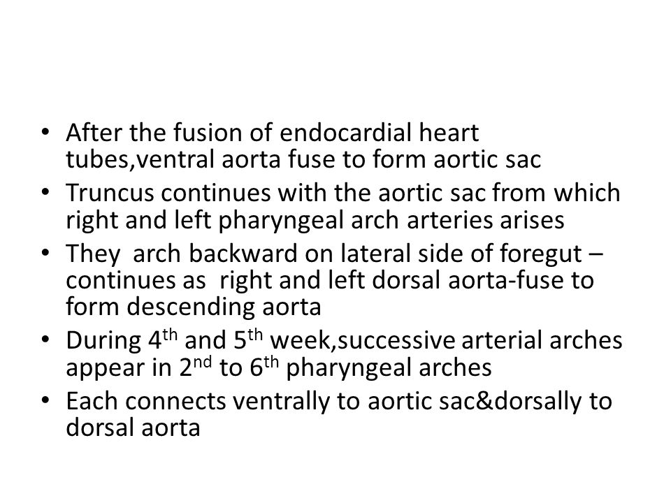 After the fusion of endocardial heart tubes,ventral aorta fuse to form aortic sac