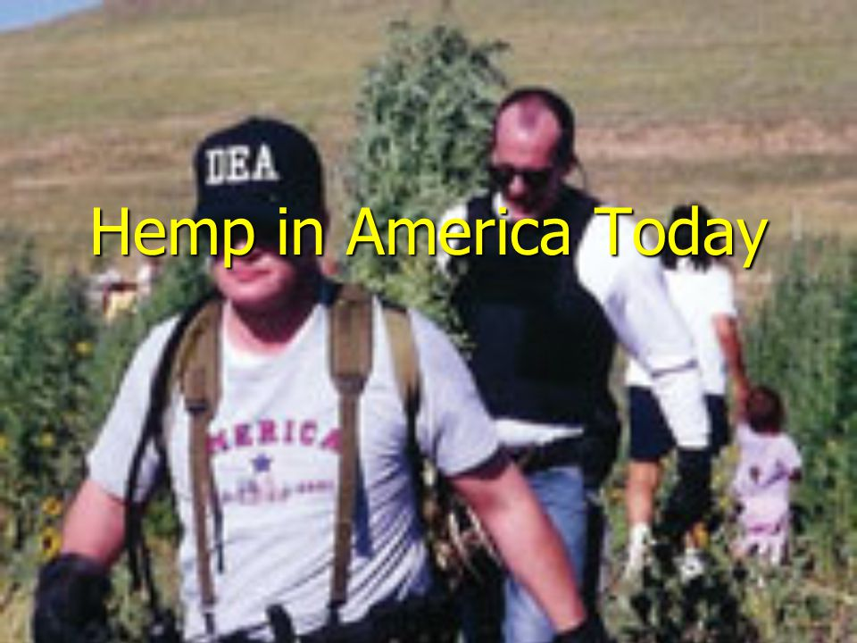 Hemp in America Today