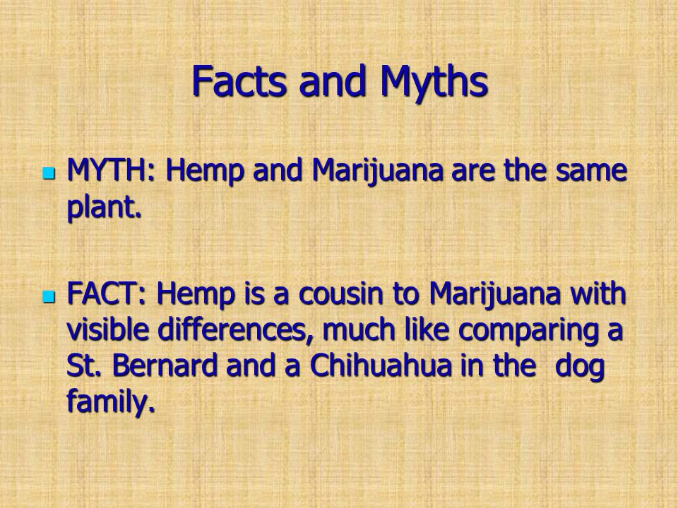 Facts and Myths MYTH: Hemp and Marijuana are the same plant.