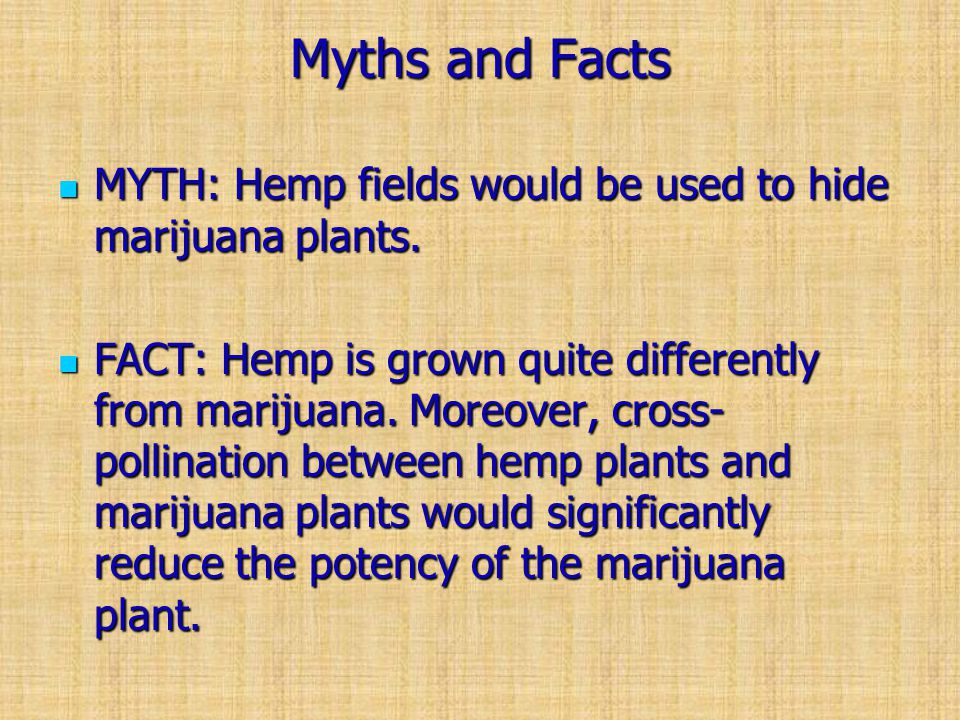 Myths and Facts MYTH: Hemp fields would be used to hide marijuana plants.