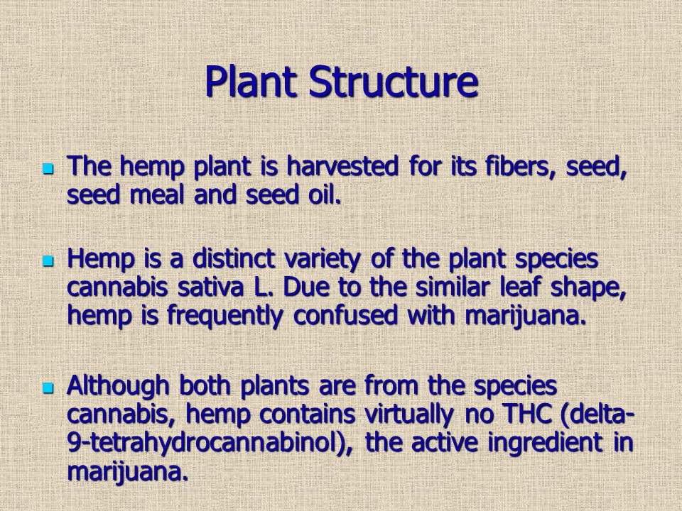Plant Structure The hemp plant is harvested for its fibers, seed, seed meal and seed oil.