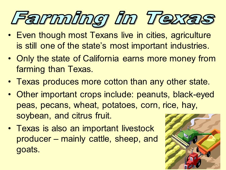 Farming in Texas Even though most Texans live in cities, agriculture is still one of the state's most important industries.
