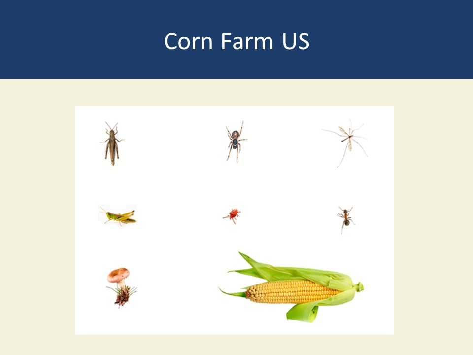 Corn Farm US