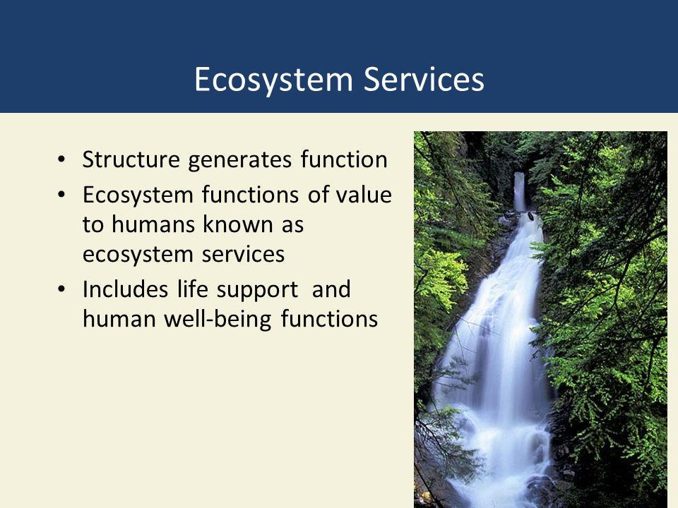 Ecosystem Services Structure generates function