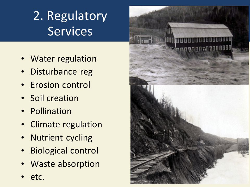 2. Regulatory Services Water regulation Disturbance reg