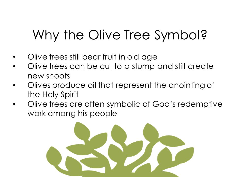 Why the Olive Tree Symbol