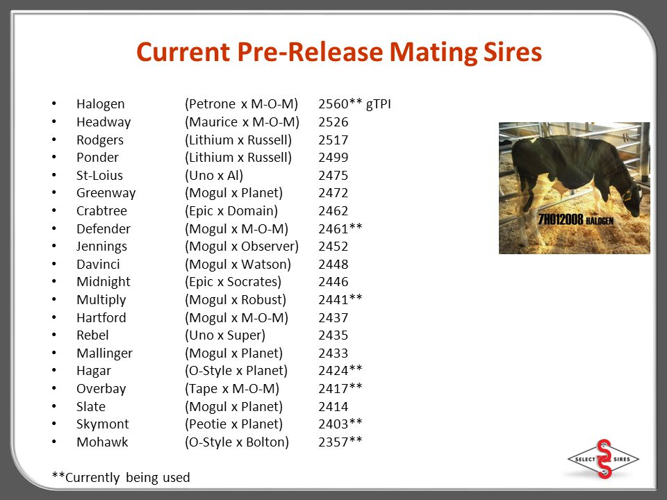 Current Pre-Release Mating Sires