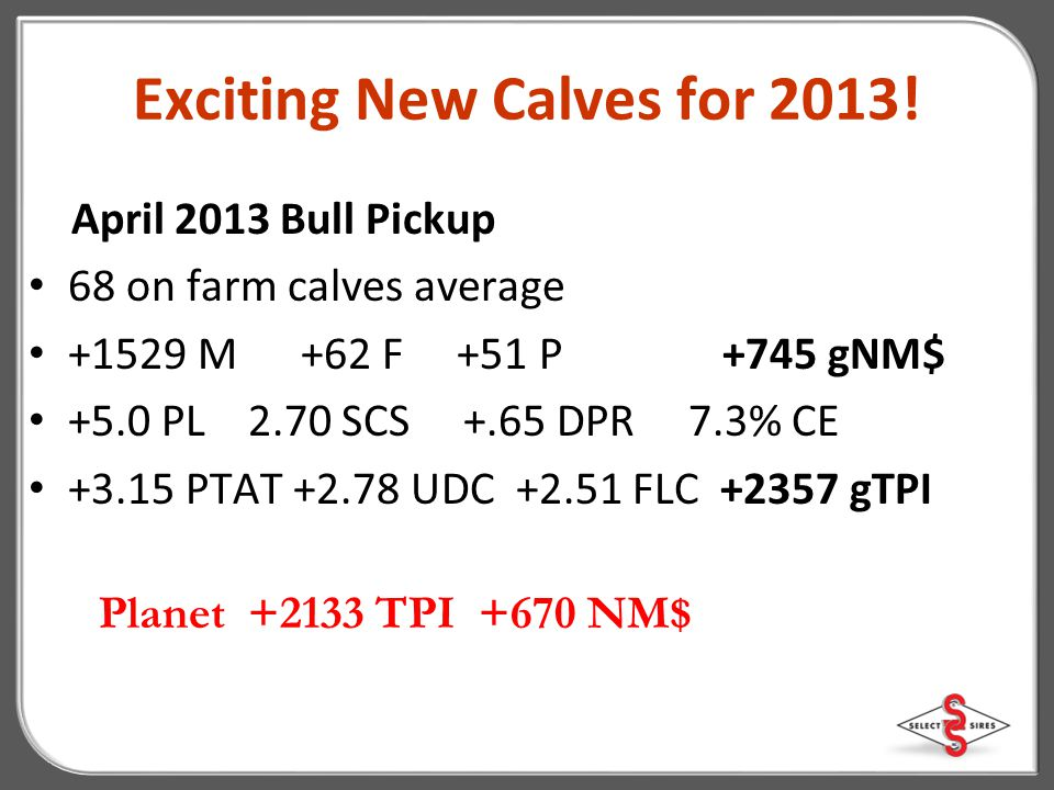 Exciting New Calves for 2013!