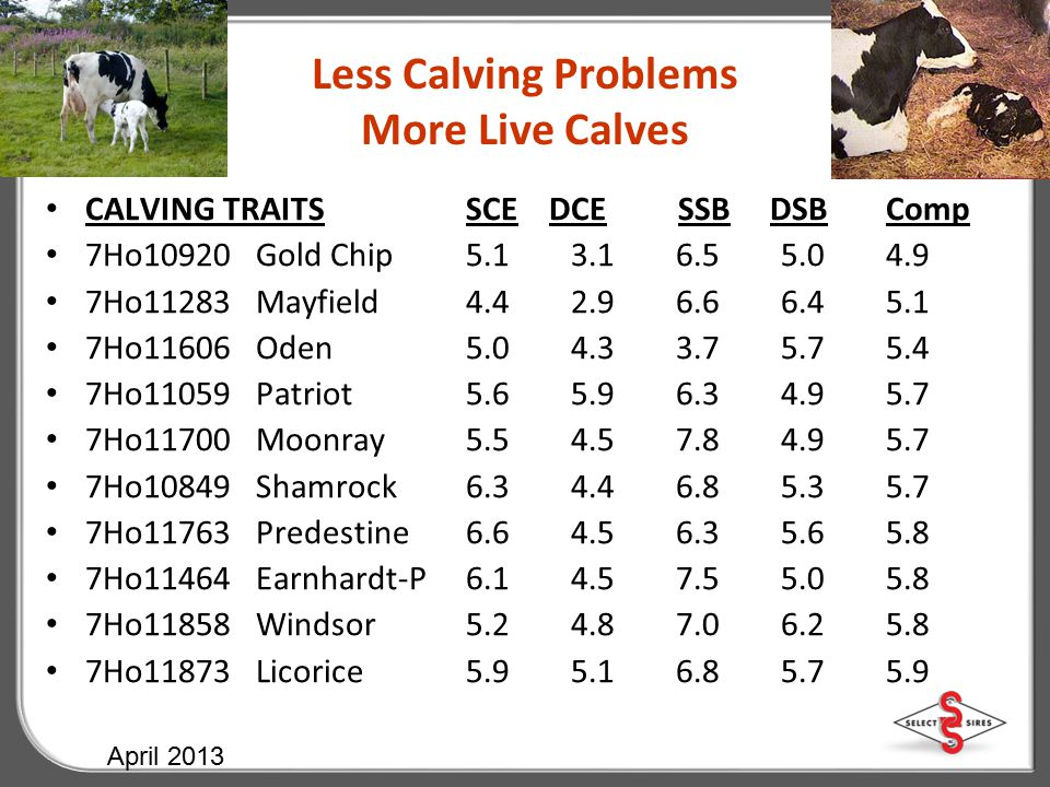 Less Calving Problems More Live Calves