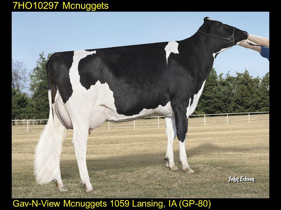 7HO10297 Mcnuggets Gav-N-View Mcnuggets 1059 Lansing, IA (GP-80)