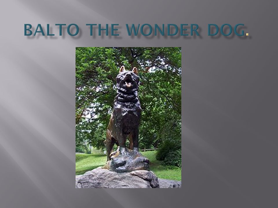 Balto the Wonder Dog.
