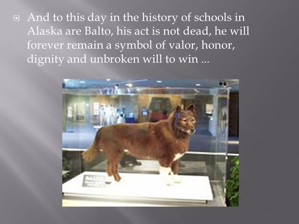 And to this day in the history of schools in Alaska are Balto, his act is not dead, he will forever remain a symbol of valor, honor, dignity and unbroken will to win ...
