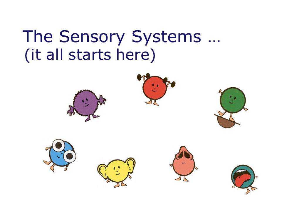 The Sensory Systems … (it all starts here)