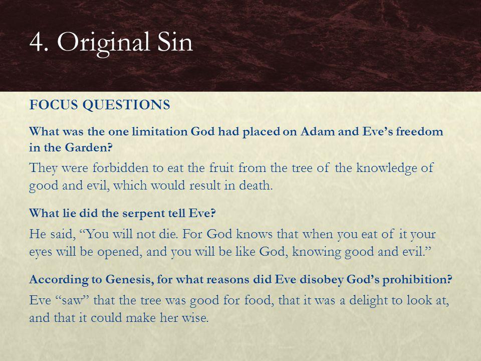 4. Original Sin FOCUS QUESTIONS