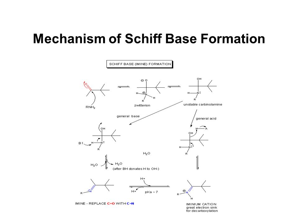 Mechanism of Schiff Base Formation
