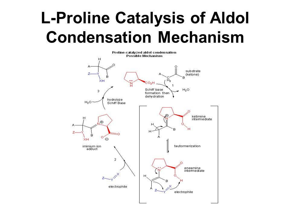 L-Proline Catalysis of Aldol Condensation Mechanism