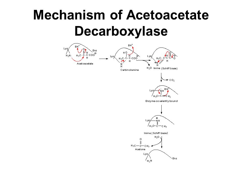 Mechanism of Acetoacetate Decarboxylase