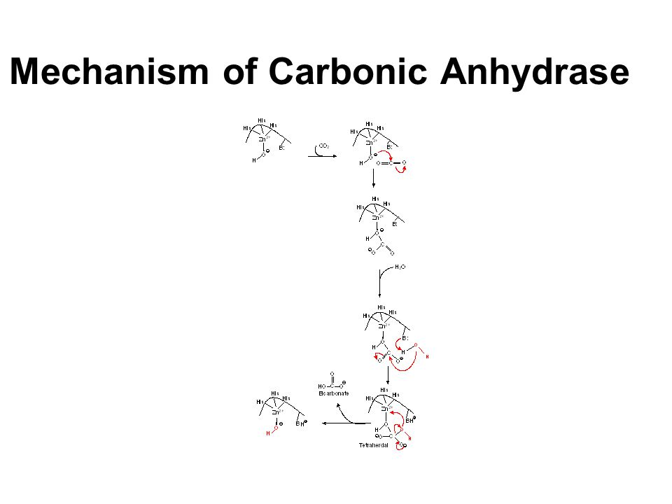 Mechanism of Carbonic Anhydrase