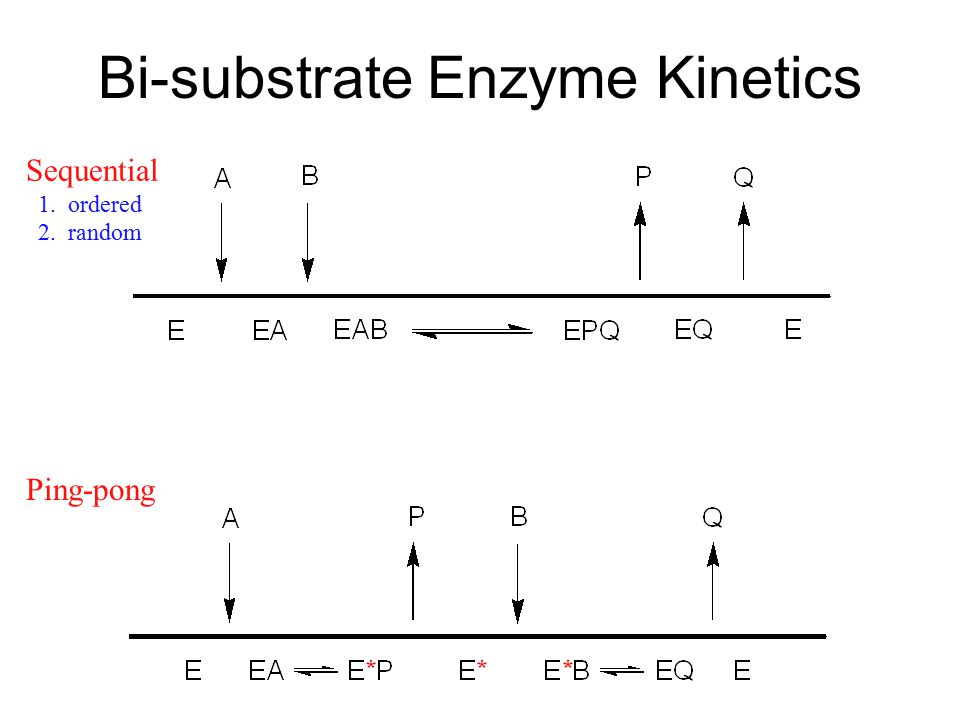 Bi-substrate Enzyme Kinetics