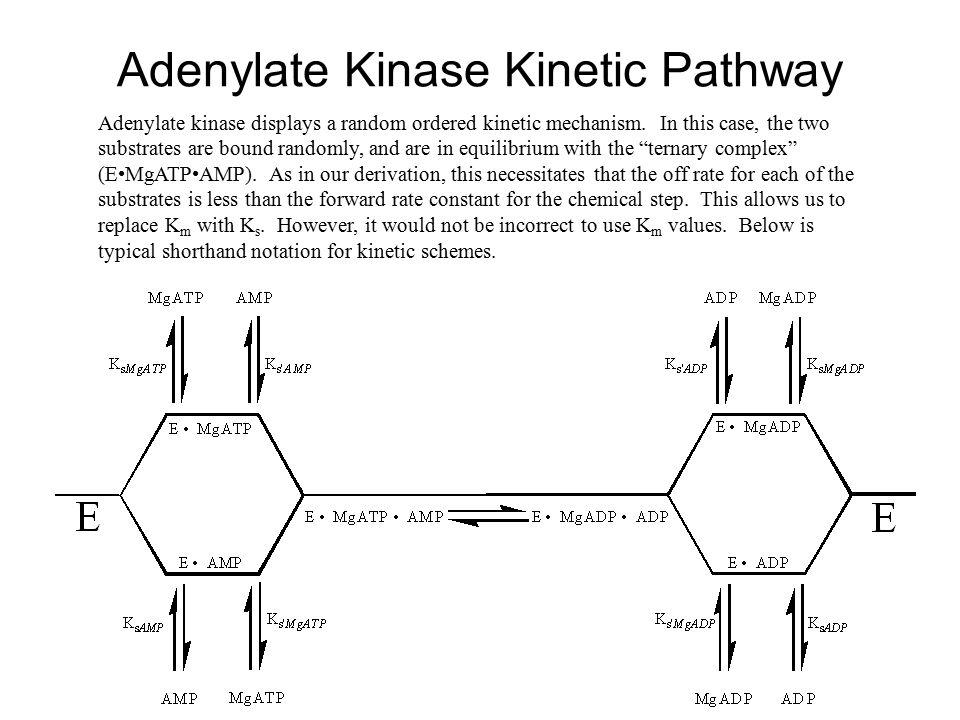 Adenylate Kinase Kinetic Pathway