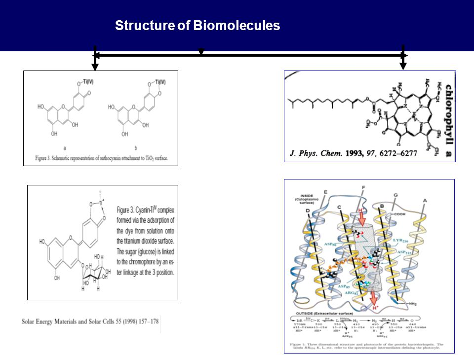 Structure of Biomolecules