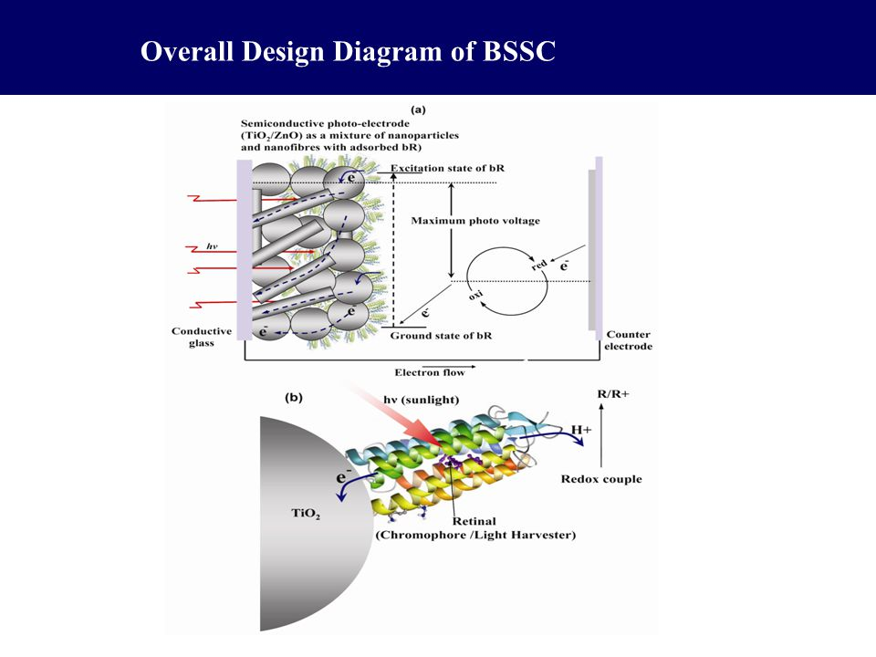 Overall Design Diagram of BSSC