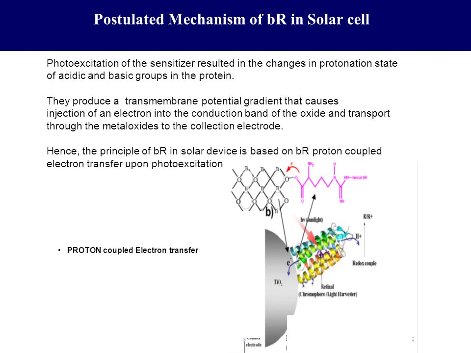 Postulated Mechanism of bR in Solar cell