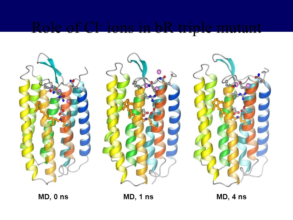 Role of Cl- ions in bR triple mutant
