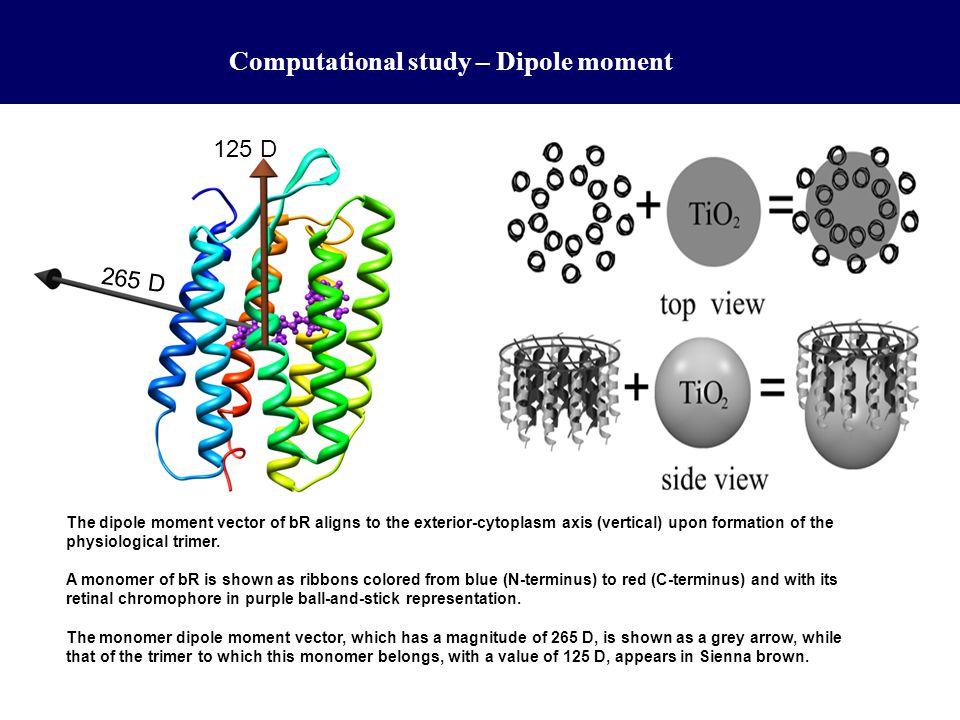 Computational study – Dipole moment