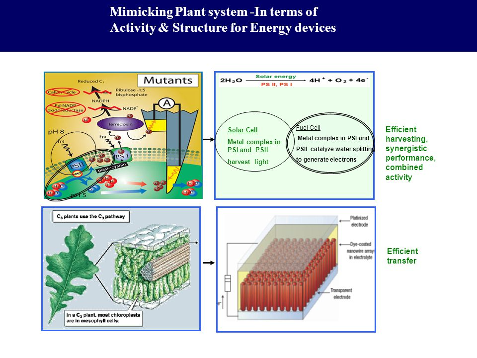 Mimicking Plant system -In terms of Activity & Structure for Energy devices