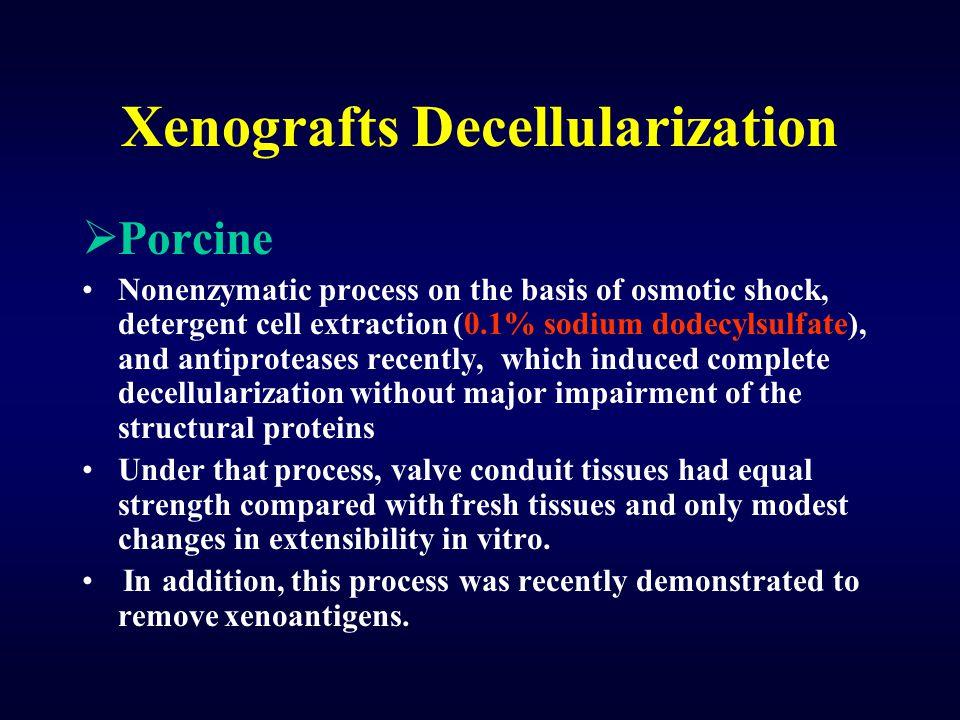 Xenografts Decellularization