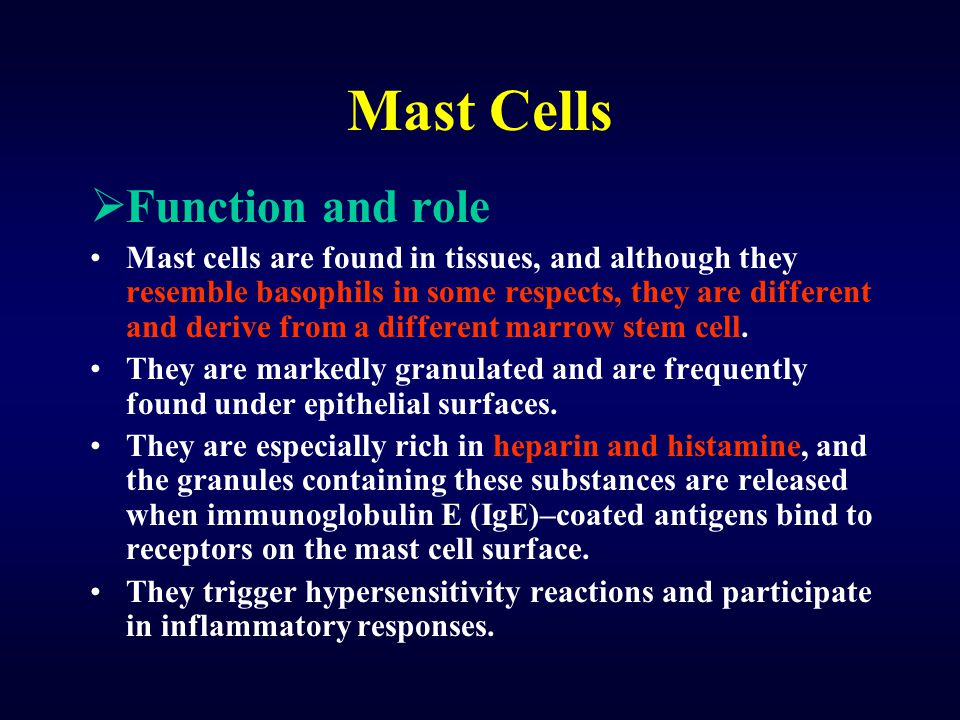 Mast Cells Function and role