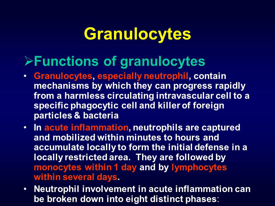 Granulocytes Functions of granulocytes