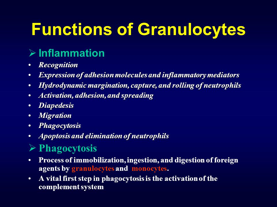 Functions of Granulocytes