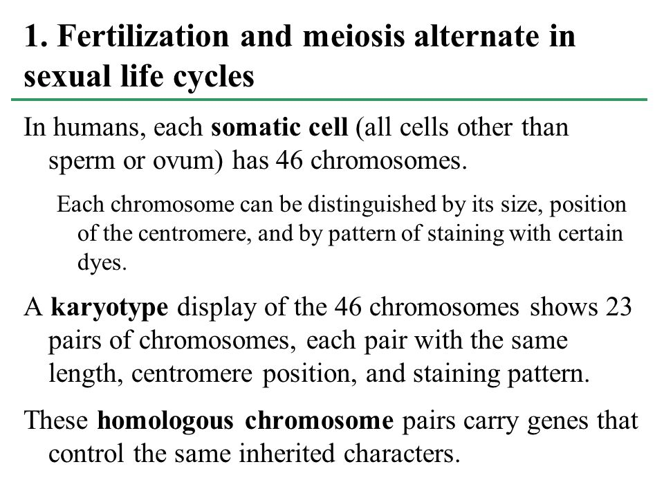 1. Fertilization and meiosis alternate in sexual life cycles